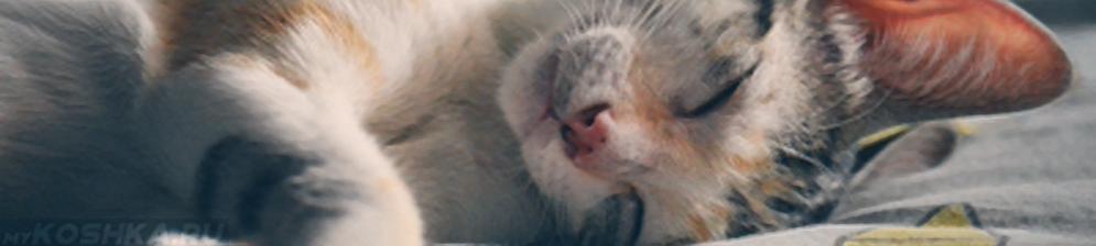 Кошка больная Лептоспирозом