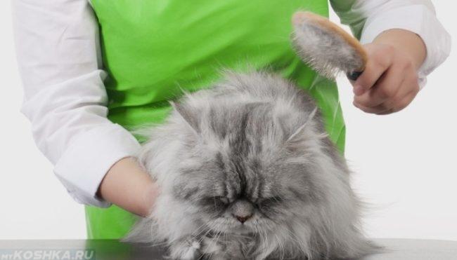 Расчесывание пушистого серого кота