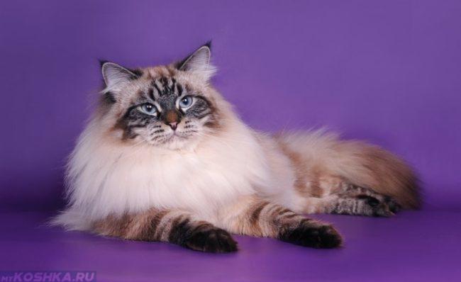 Маскарадная пушистая кошка с кисточками