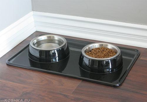 Две миски с водой и кормом для кошки