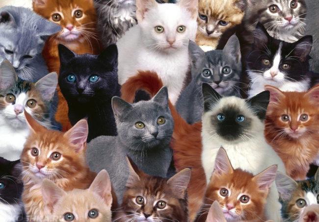 Много кошек разных пород