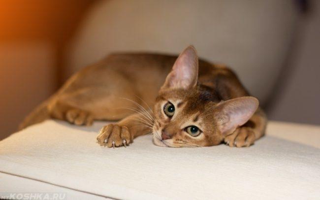 Отсутствие аппетита и угнетение у кота