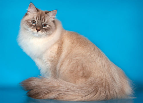 Маскарадная кошка
