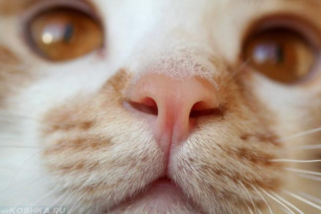 Розовый но бежевого кота