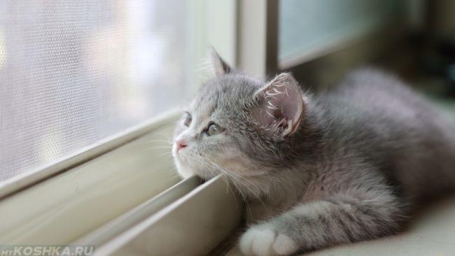 Серый котик лежит у окна