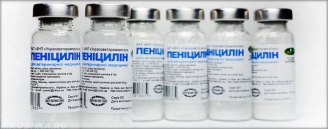 Шесть баночек пеницилина в ряд
