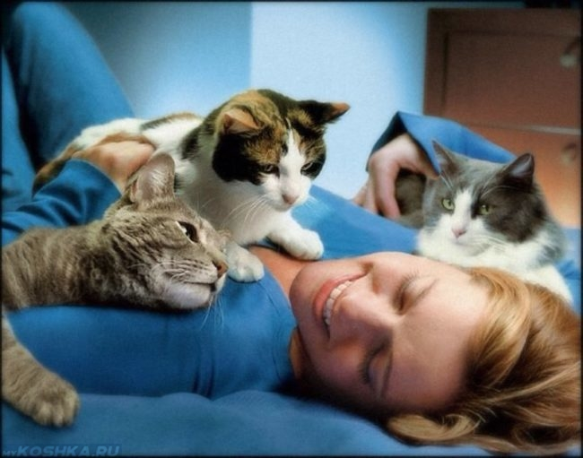Три кошки лежат на животе у девушки
