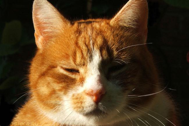 Воспалительный процесс в головном мозге у кота