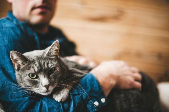 Серый кот и человек в синей одежде