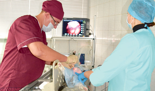 Врачи делают операцию кошке