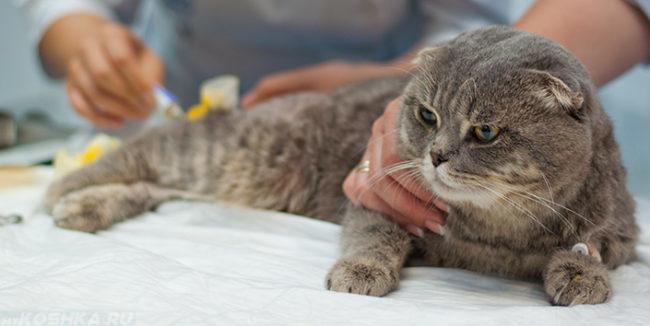 Кот на ветеринарном столе