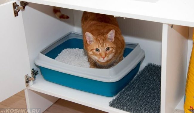 Рыжий кот сидит в сине-белом лотке