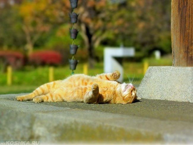 Рыжий кот лежащий в лучах солнца