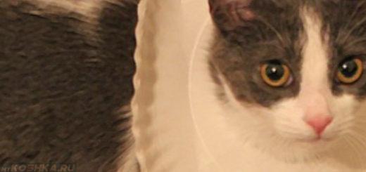 Защитный воротник для кошки сделанный своими руками из тарелки
