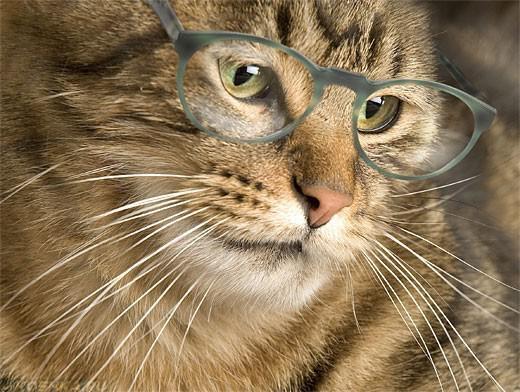 Пушистый кот в очках