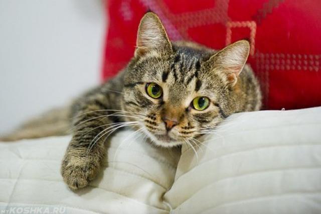 Юный кот лежит на белом диване