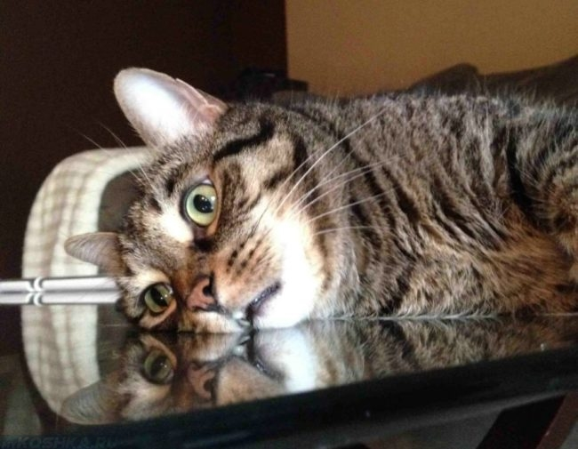 Депрессия у полосатого кота
