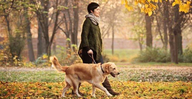 Пёс гуляющий с хозяйкой на улице
