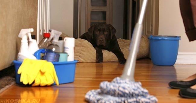 Бытовая химия и собака на полу