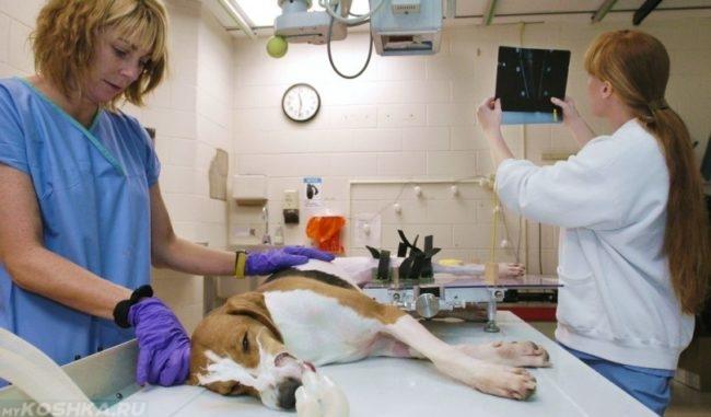 Хирургия на собаки в ветеринарии