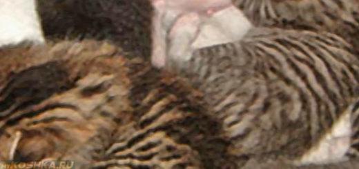 Кошка родила сразу всех котят