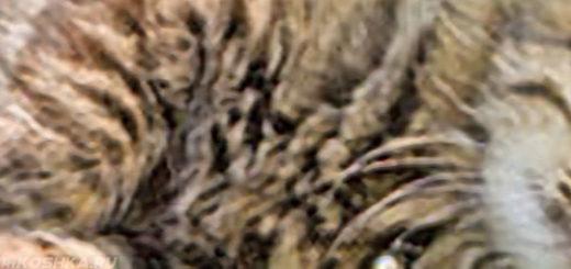 Кошка заваливается на бок