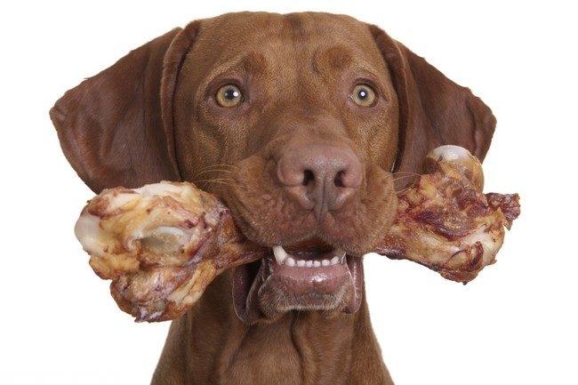 Большая кость в пасти собаки