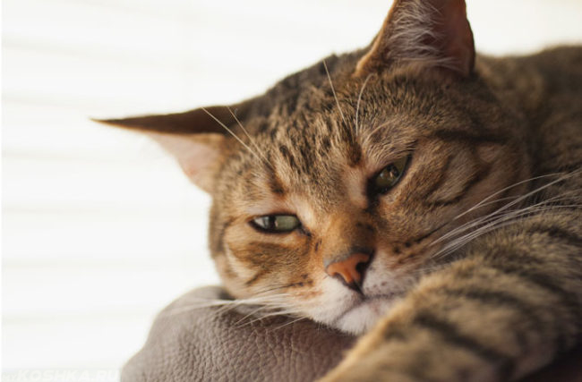 Нет аппетита у кота и снижена активность
