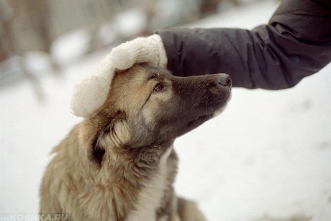 Похвала собаки на улице зимой
