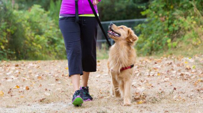 Прогулка с собакой на поводке