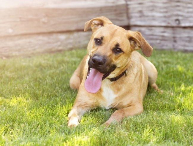 Счастливая собака на траве