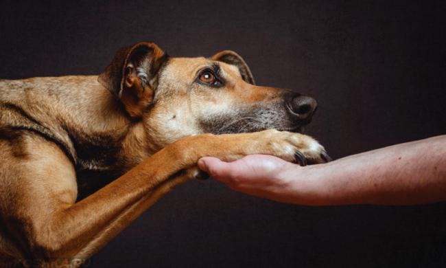 Собака и рука хозяина на тёмном фоне