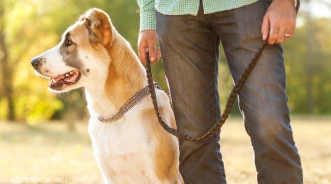 Собака на поводке и хозяин на улице