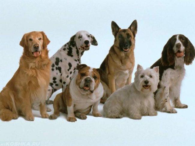 Разные породы собак на голубом фоне