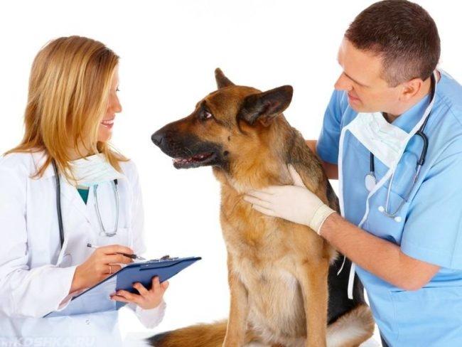Собака и два ветеринара стоящие рядом