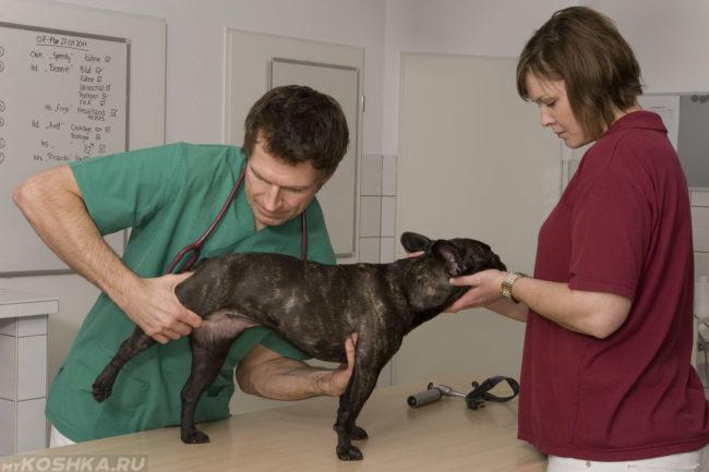 Собака на ветеринарном столе