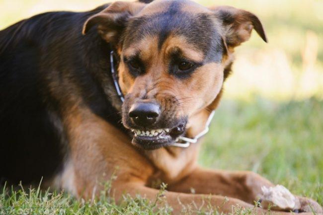 Собака с ошейником на траве