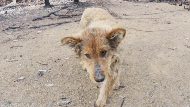 Бездомный пёс коричневого окраса