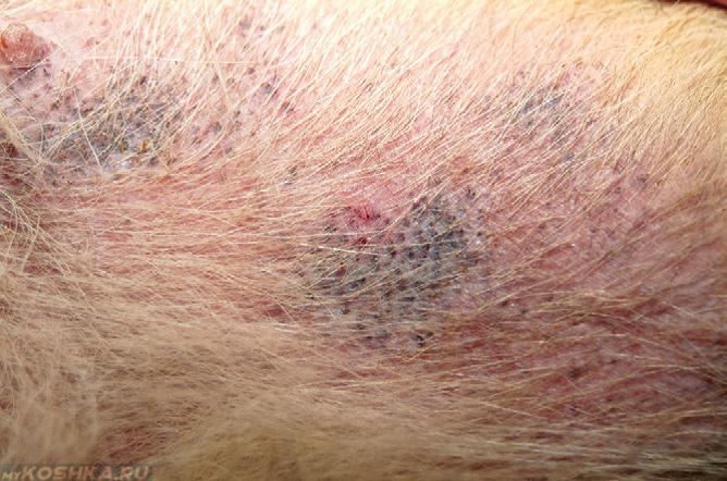 кожные паразиты у человека лечение народными средствами