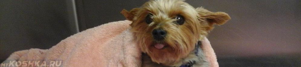 Собака больная гастроэнтеритом