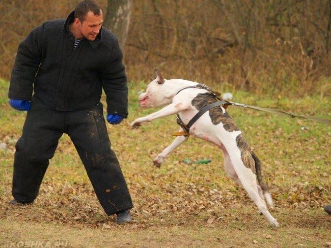 Выполнение собакой команды чужой