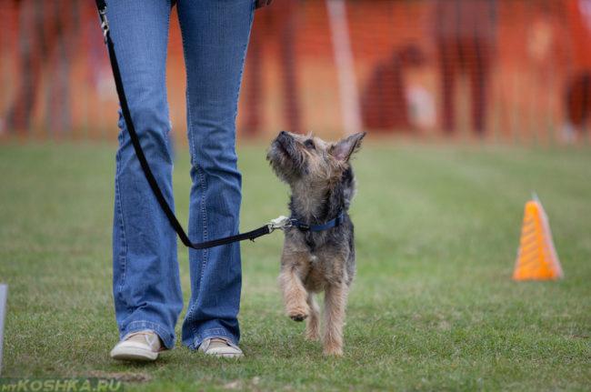 Команда рядом сказанная собаке