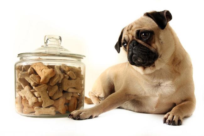 Сухой корм в прозрачной баночке и собака