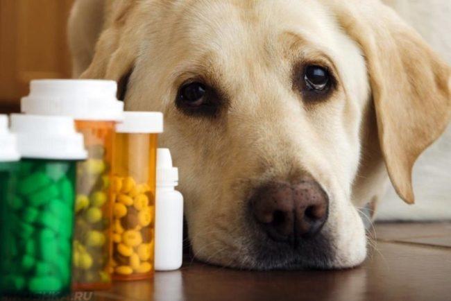 Лекарства в баночках и собака