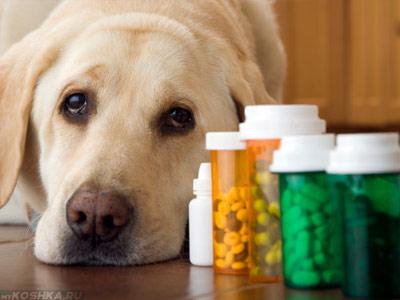 Грустная собака рядом с лекарствами