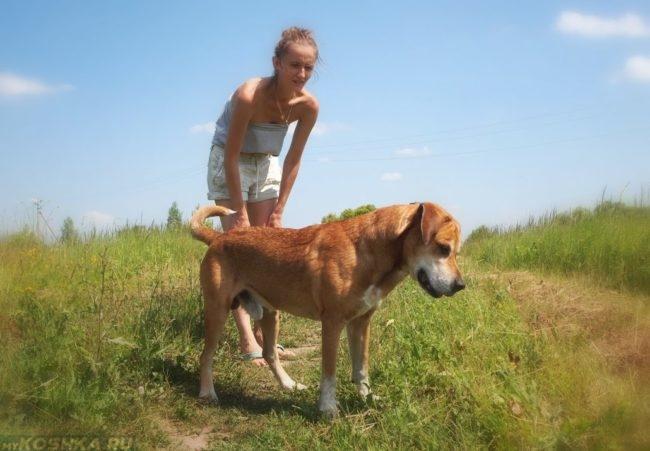 Собака с хозяйкой летом на природе
