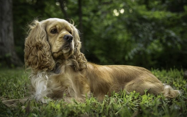 Собака лежащая на зелёной траве