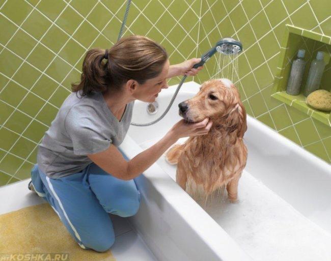 Купание собаки из душа в ванной