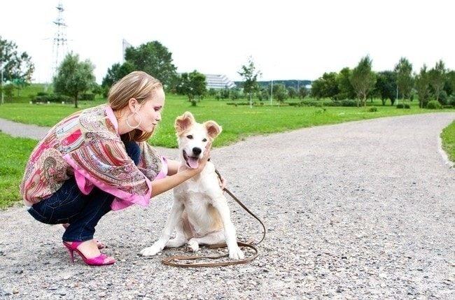 Собака на улице с поводком