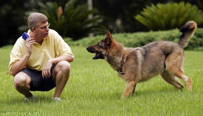 Обучение собаки командам